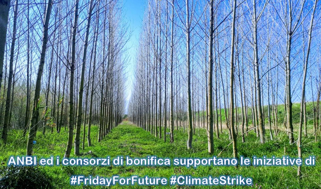#FridaysForFuture
